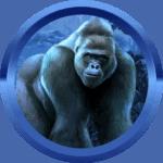 Fendy44 avatar