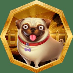 Exclusive Pug